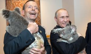 Tony Abbott and Vladimir Putin meet koalas before the start of the first G20 meeting in Brisbane. Photograph: Andrew Taylor/AFP/Getty Images